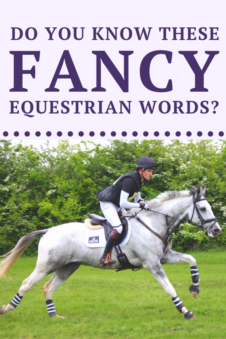 Do You Know These Fancy Equestrian Words Horses Equestrian Horse Life [ 1102 x 735 Pixel ]