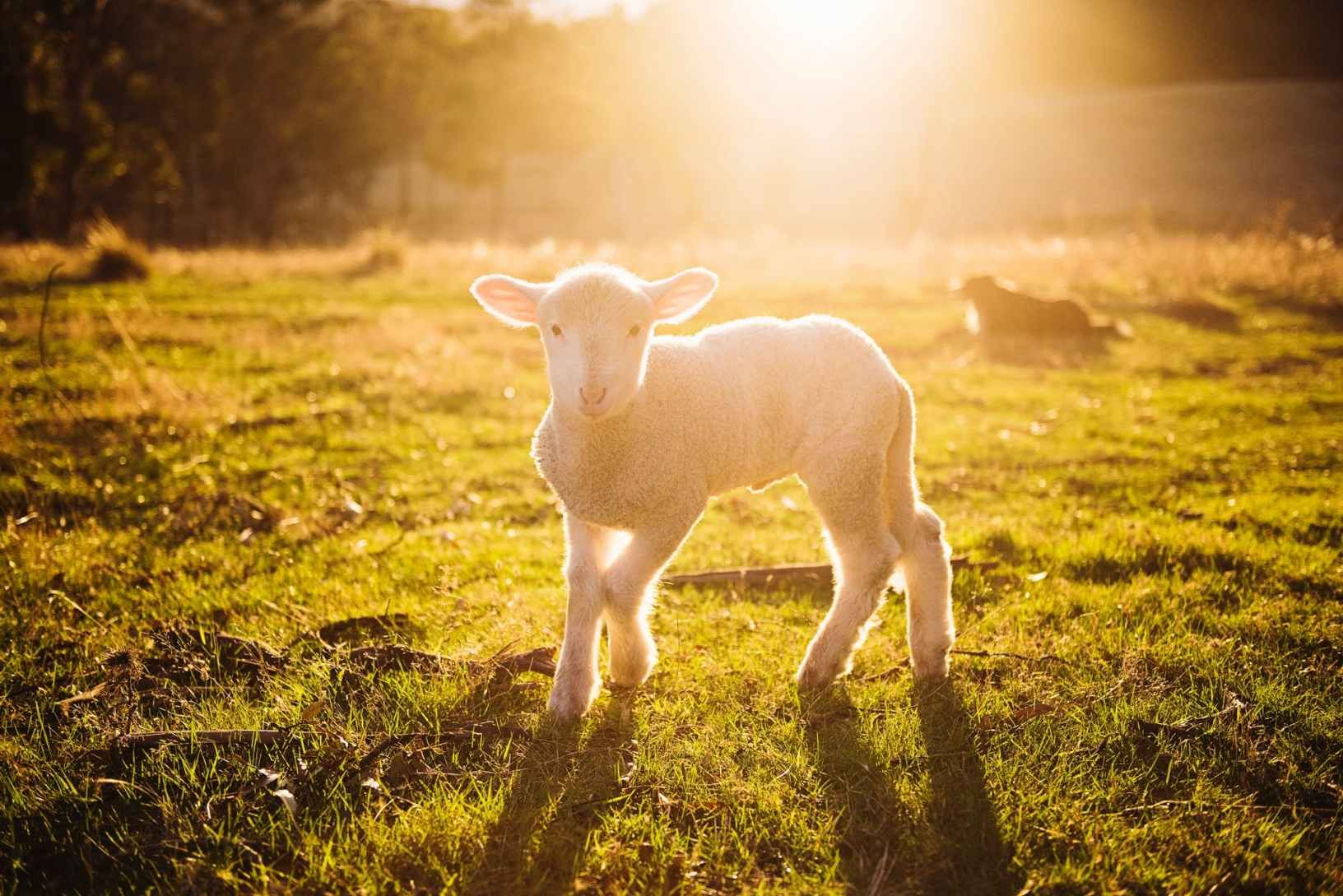What is Passover? How is Jesus the Final Passover Lamb