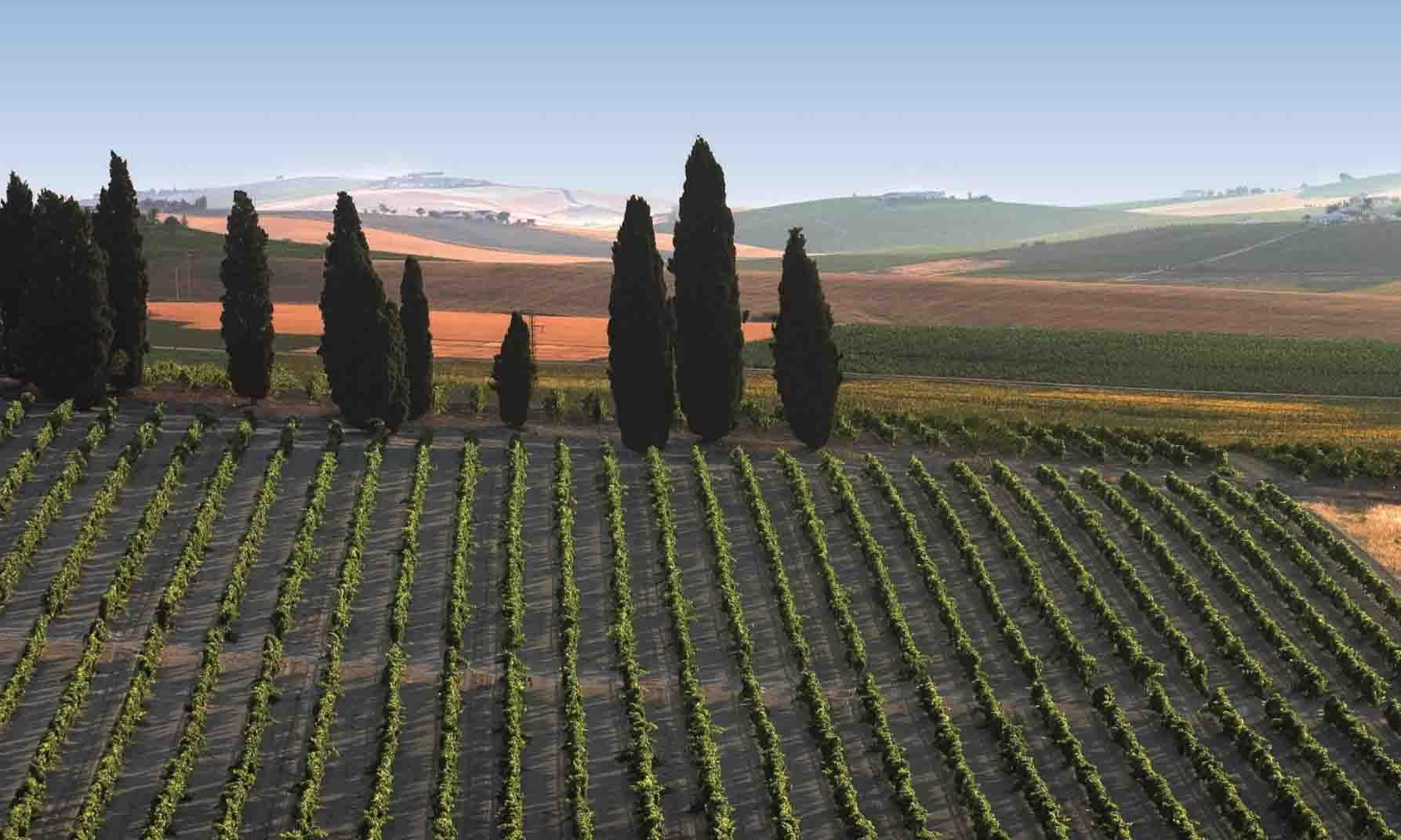 Rincones de Andalucía: viñedos de Jerez de la Frontera (Cádiz) / Places of Andalusia: vineyards of Jerez de la Frontera (Cádiz)