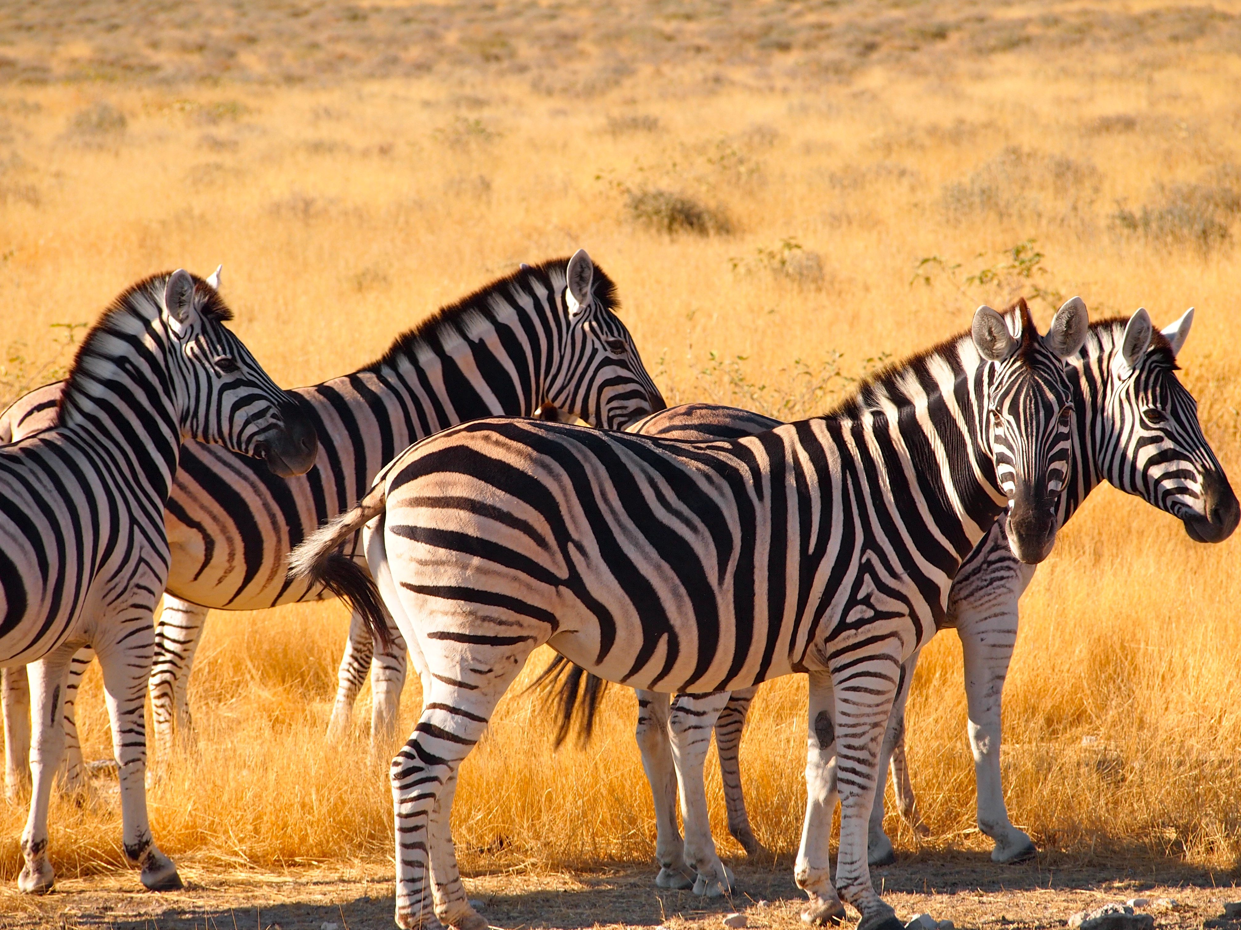 Животные африки картинки с названием животных
