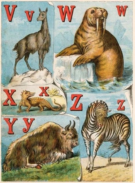 From vicuna to zebra. The alphabet of animals. 1880.