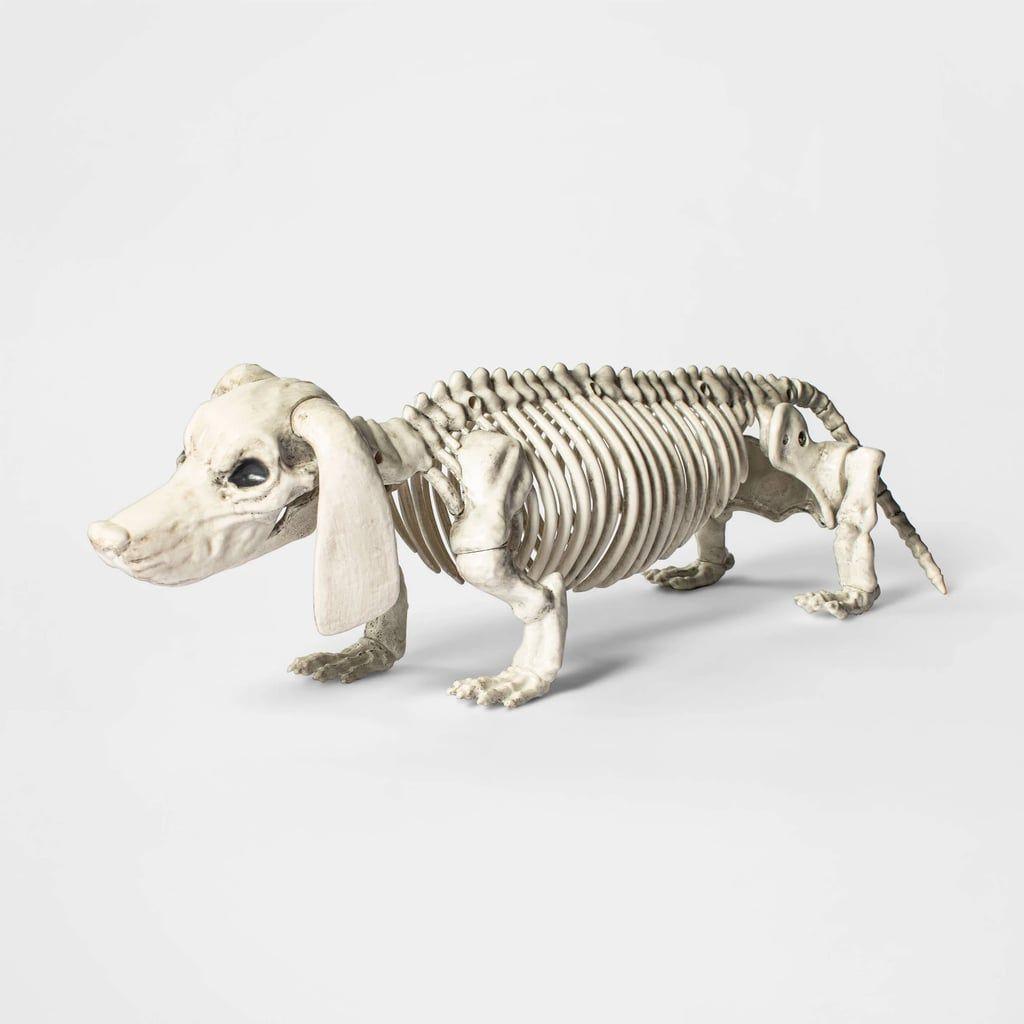 Dachshund Halloween Decorations.Medium Dachshund Skeleton Outdoor Halloween Halloween Decorations Indoor Dog Skeleton