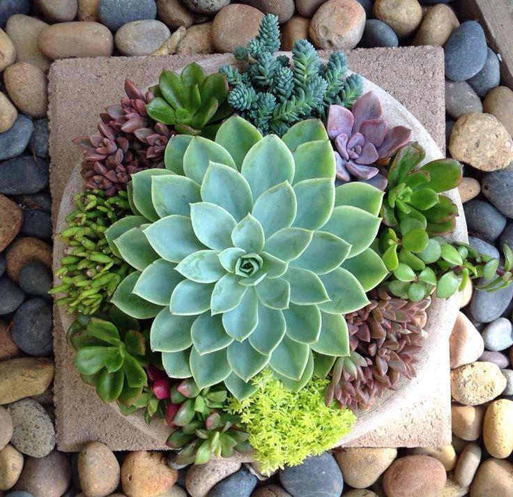 Nice Succulent Arrangement By Chicweed Patio U0026 Garden