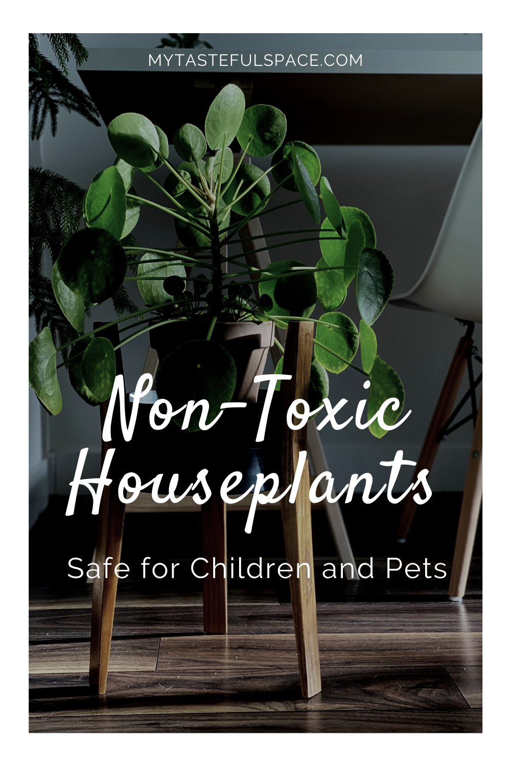 10 Best Non Toxic Houseplants That Are Safe For Children Cats Dogs My Tasteful Space In 2020 Dog Friendly Plants Dog Safe Plants Plants
