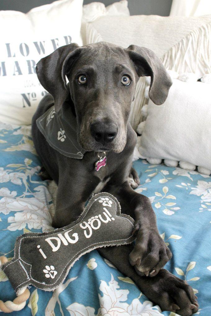 I Dig You Bone Shaped Sturdy Canvas Tug Of War Dog Toy Blue