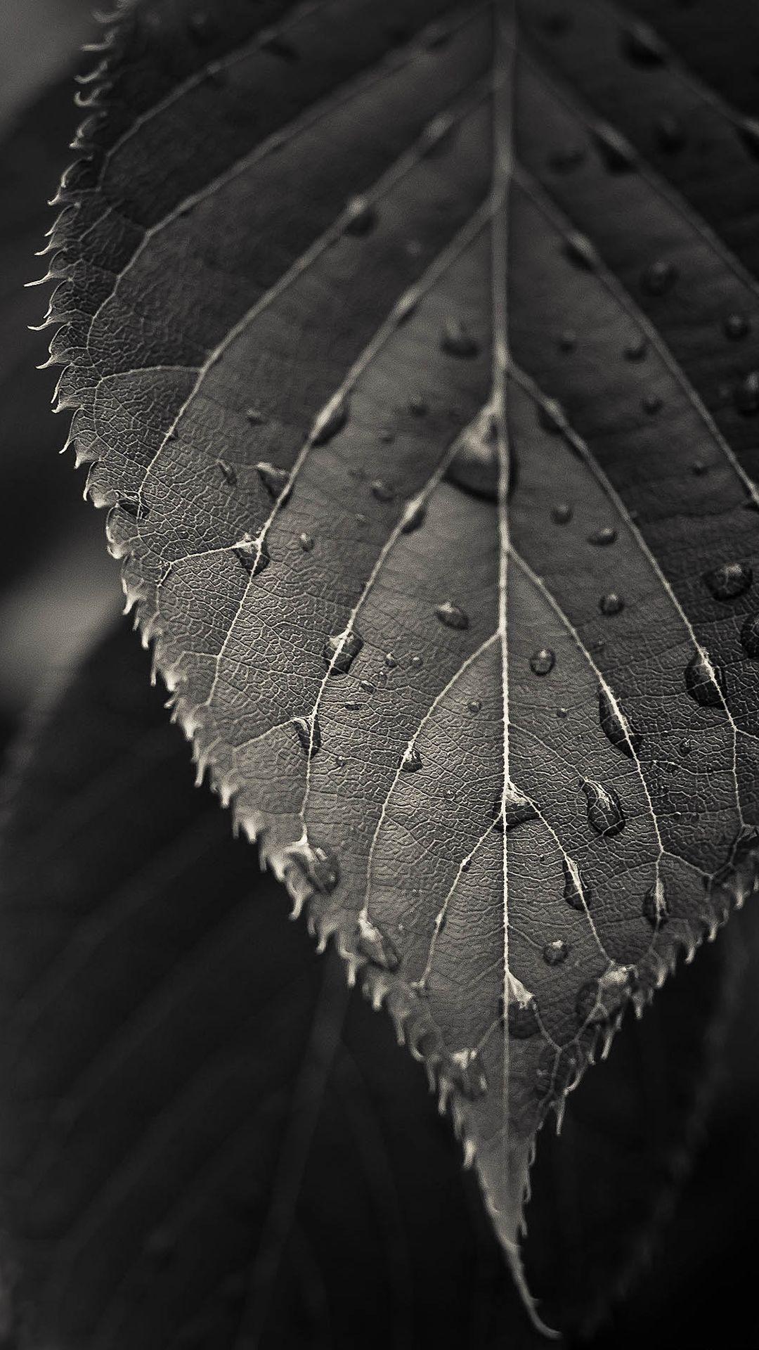 Gray Leaf Macro Iphone 7 Wallpaper Htc Wallpaper Dark Wallpaper Pretty Wallpaper Iphone