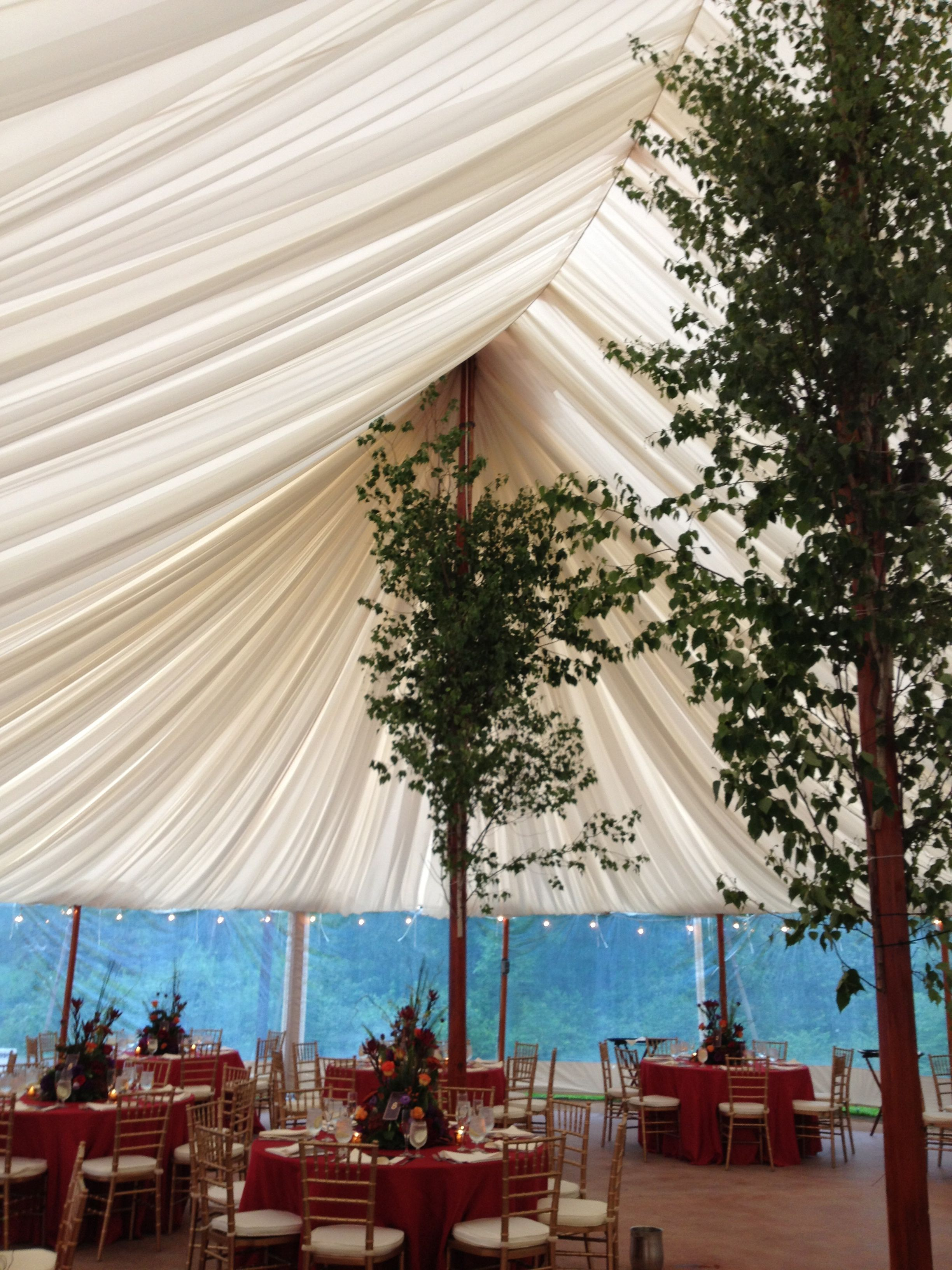 Trees on the tent posts. & Draped ceiling of a Sperry tent from one of our weddings in June ...