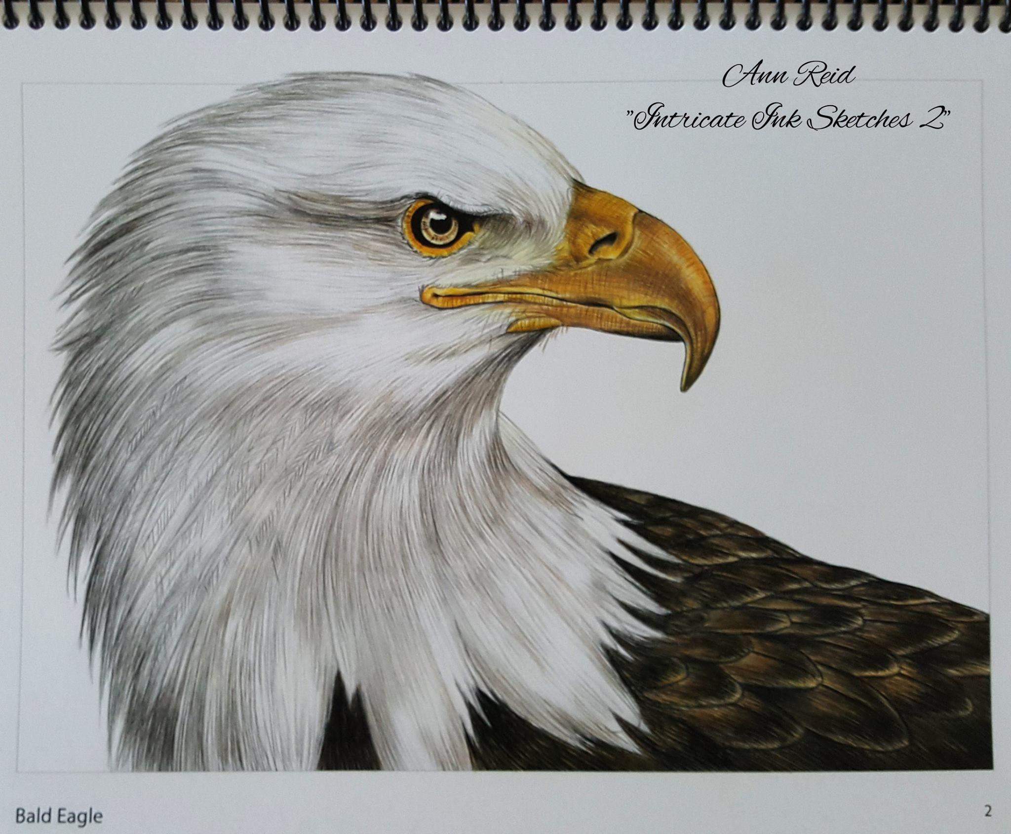 Белоголовый орлан фурри