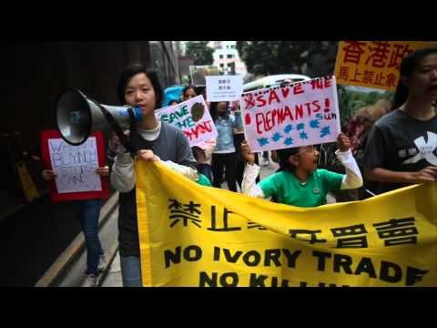 Hong Kong Schoolchildren Lead Ivory Protest Ivory Trade Kong Trading