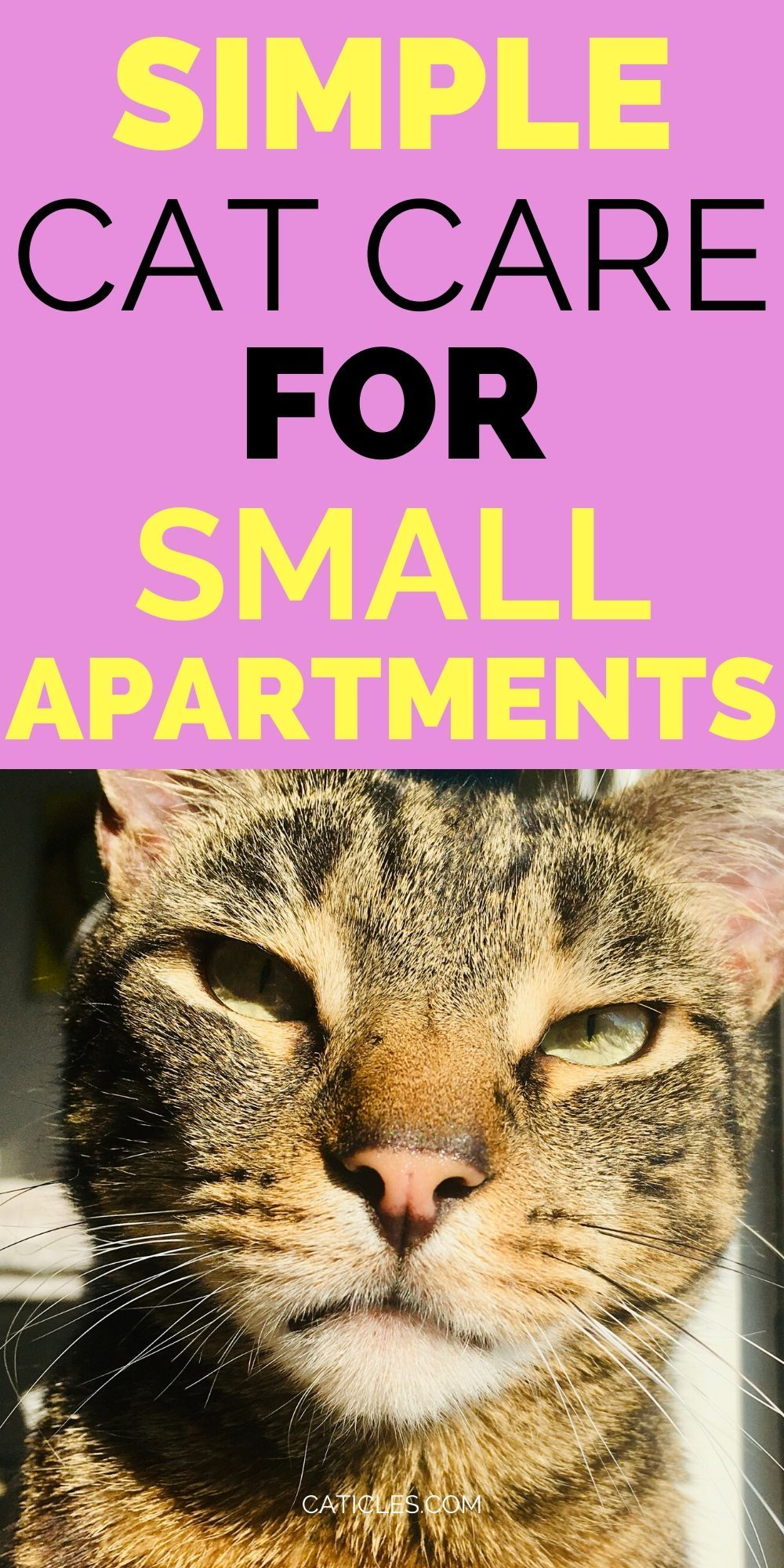 19 Ideas For Cats In Small Apartments You Ll Both Love Caticles In 2020 Cat Care Cat Life Hacks Small Apartment Cat