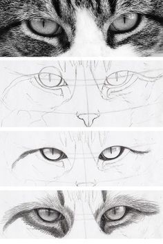 Katzen Augen Augen Zeichnen Katzenaugen Zeichnungsskizzen