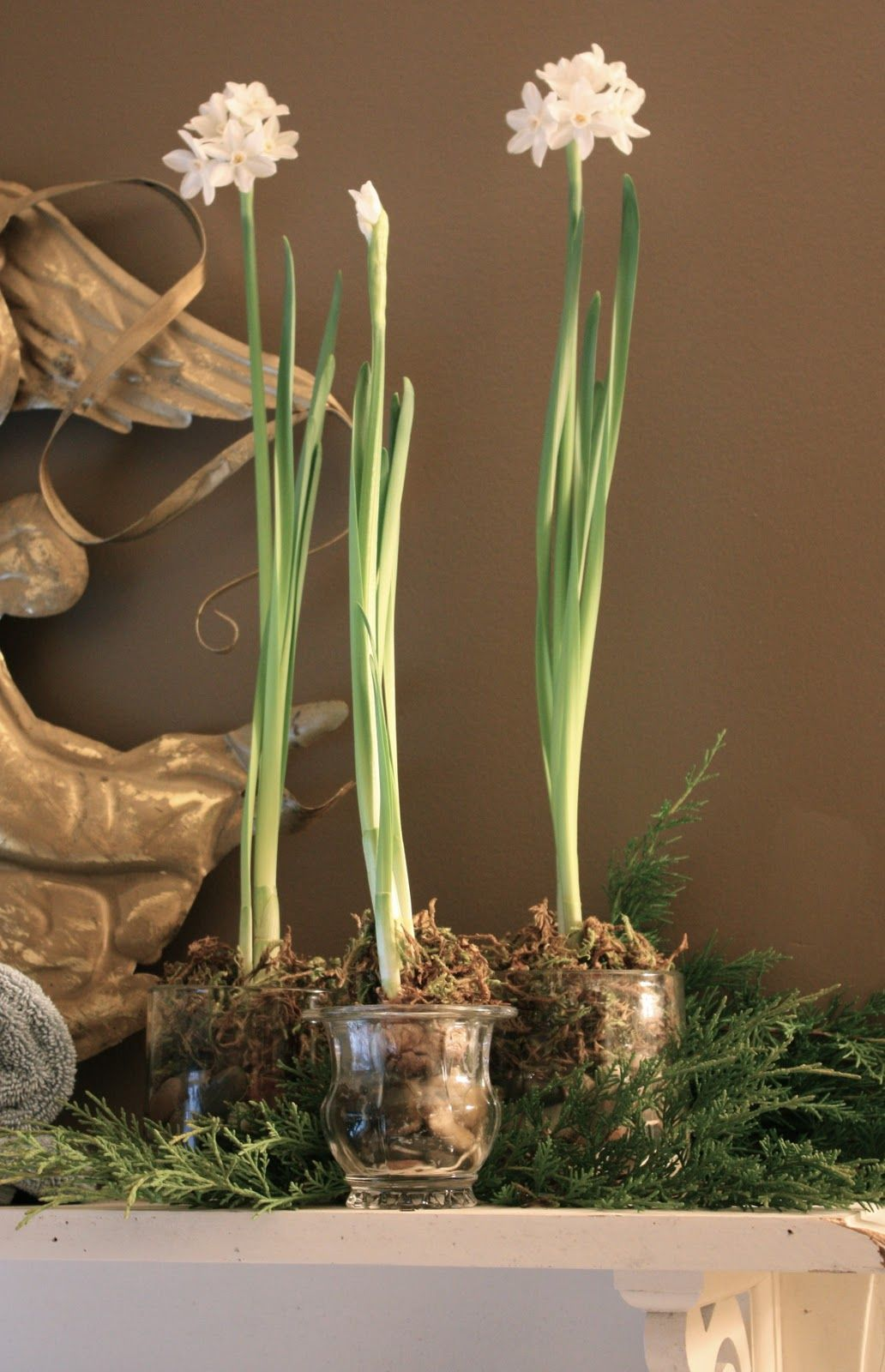 So Easy Saw Paperwhite Bulbs At Walmart For 4 97 For 4 Might Start To Next Week For Christmas Day Blooms Can Do Christmas Home Paperwhites Bulb Flowers
