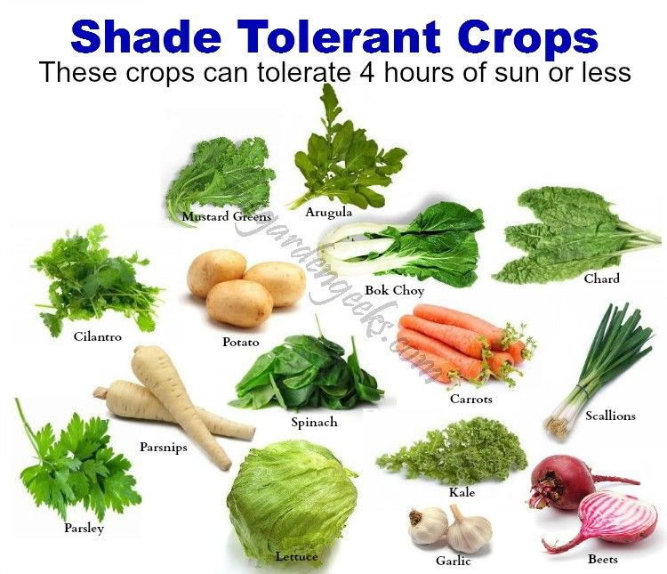 shade tolerant crops for seed giveaways daily tips and plant info come join