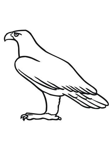 Aigle Royal De Profil Coloriage Dessin Aigle Dessins Faciles
