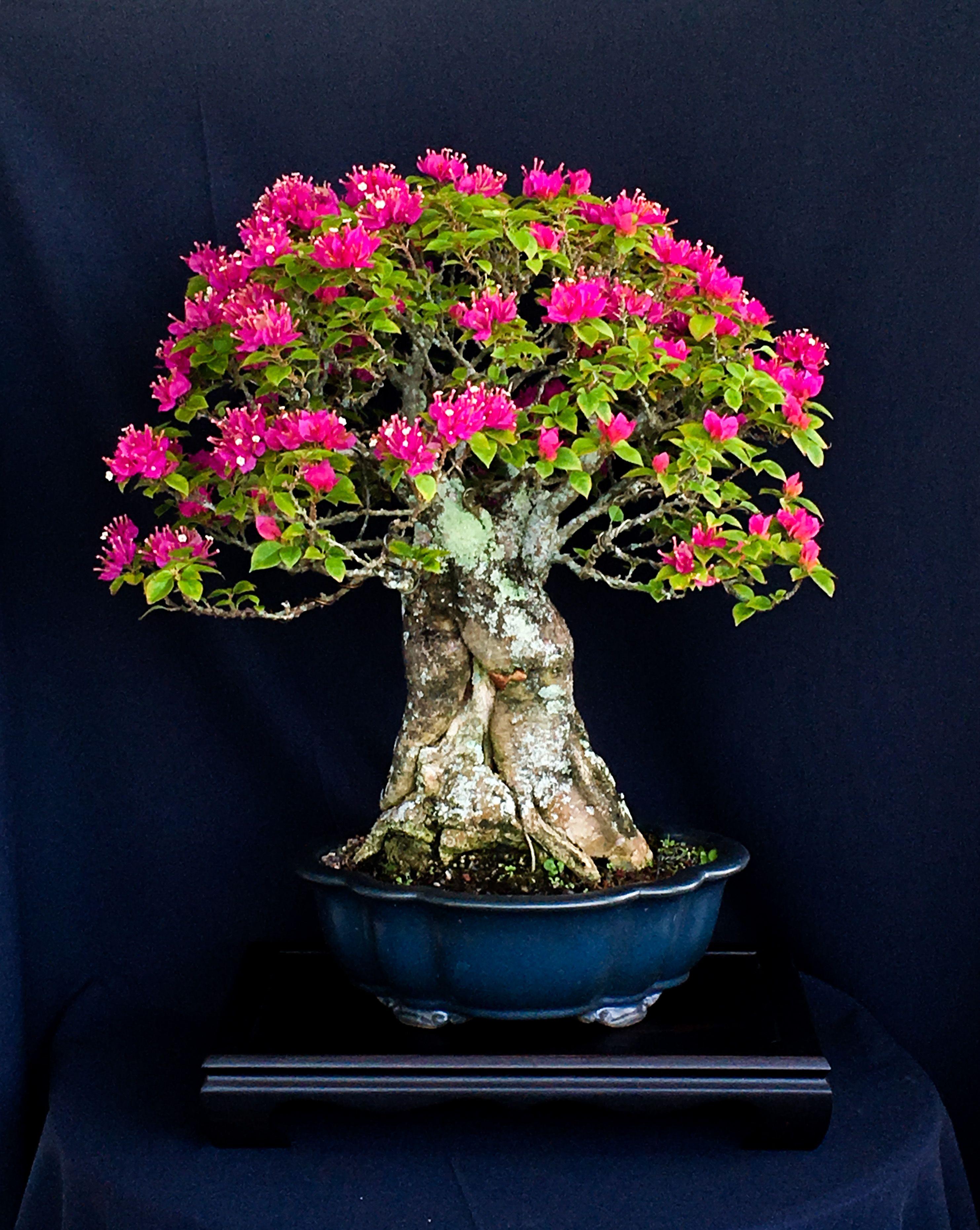 ключевой цветок бонсай фото проекта считают