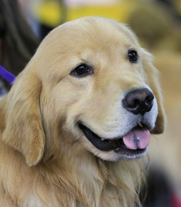 Westminster Dog Show Westminster Dog Show Best Dogs For