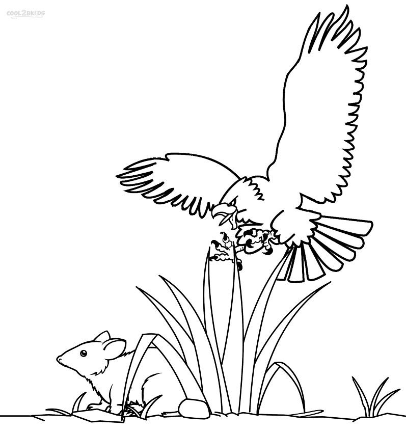 Printable Bald Eagle Coloring Pages For Kids Cool2bKids Birds - new eagles to coloring pages