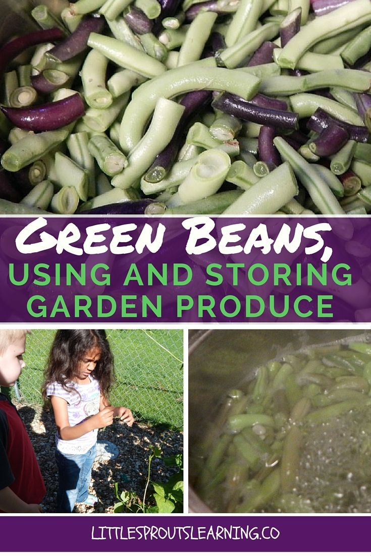 Right now green beans are in full production at Little Sprouts. I used to hate…