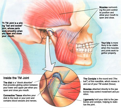 The temporomandibular joints (TMJ) connect the lower jaw, or ...