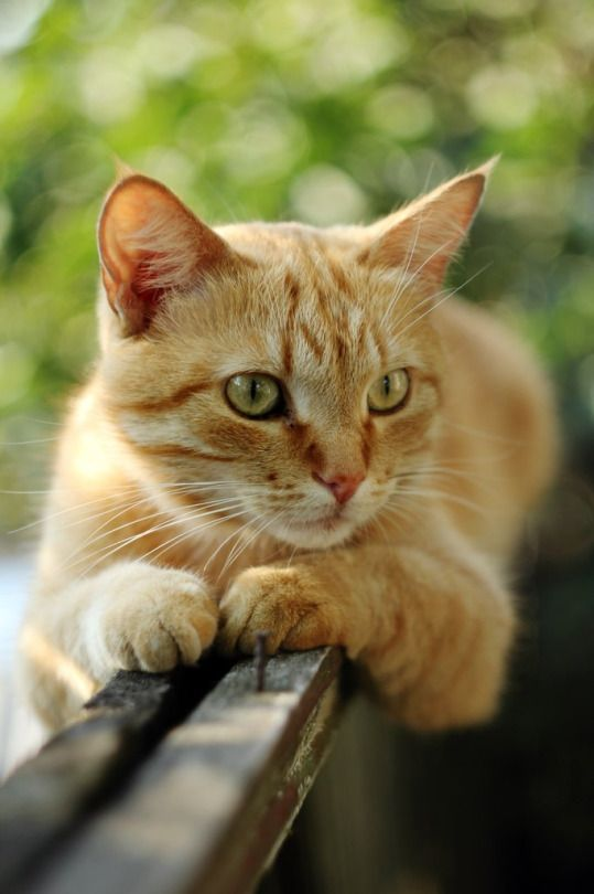 Debating Keeping Your Cat Indoors Or Letting Them Outside Orange Tabby Cats Cats Cute Cats