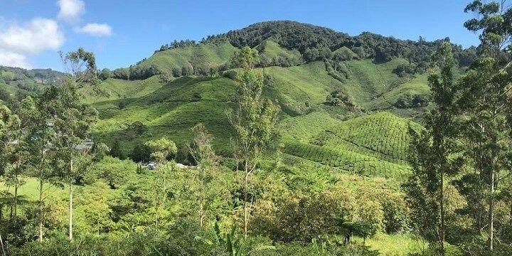 Boh Tea Plantation, Cameroon Highlands, Malaysia