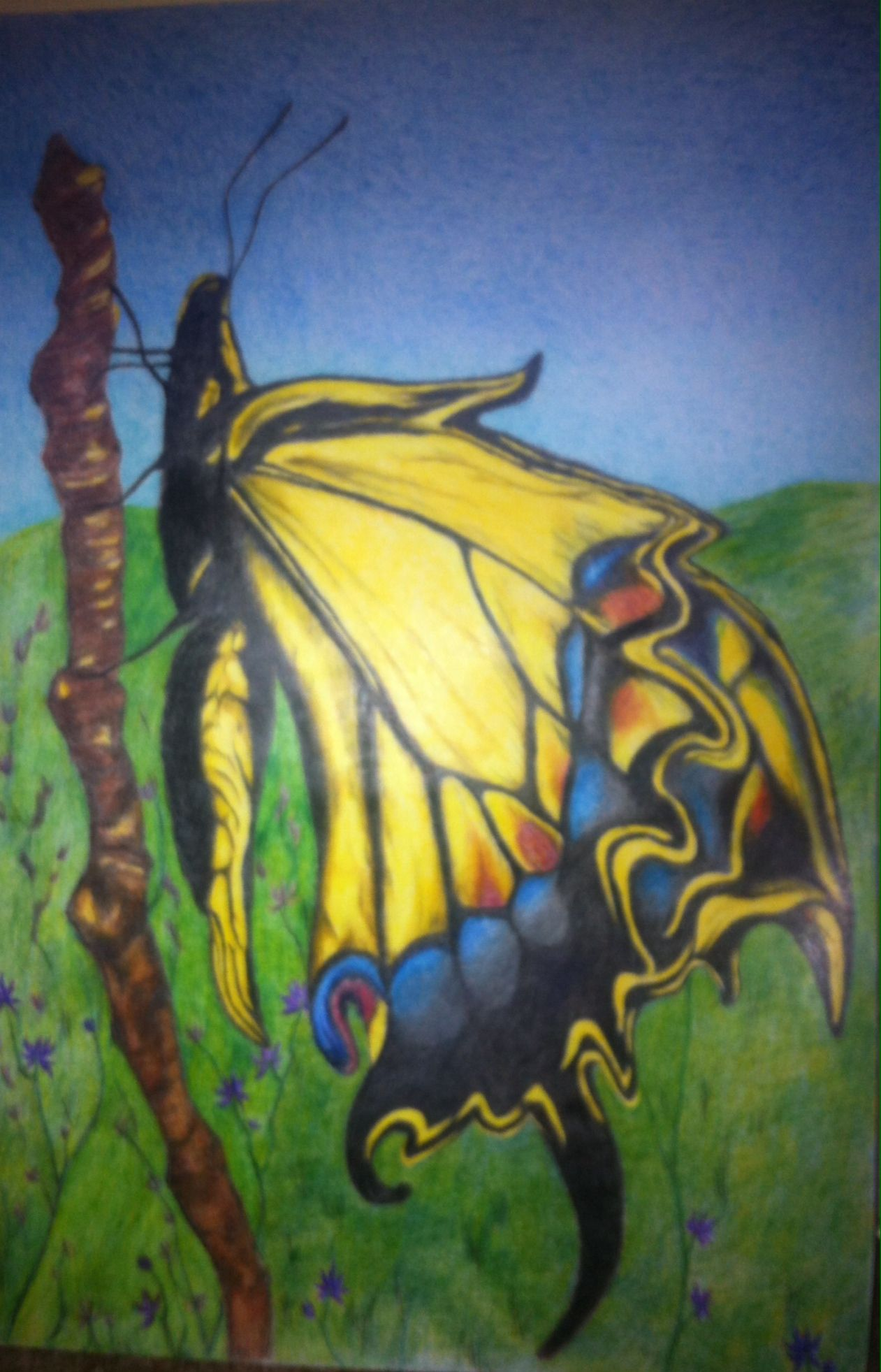 Colored pencil swallow tail
