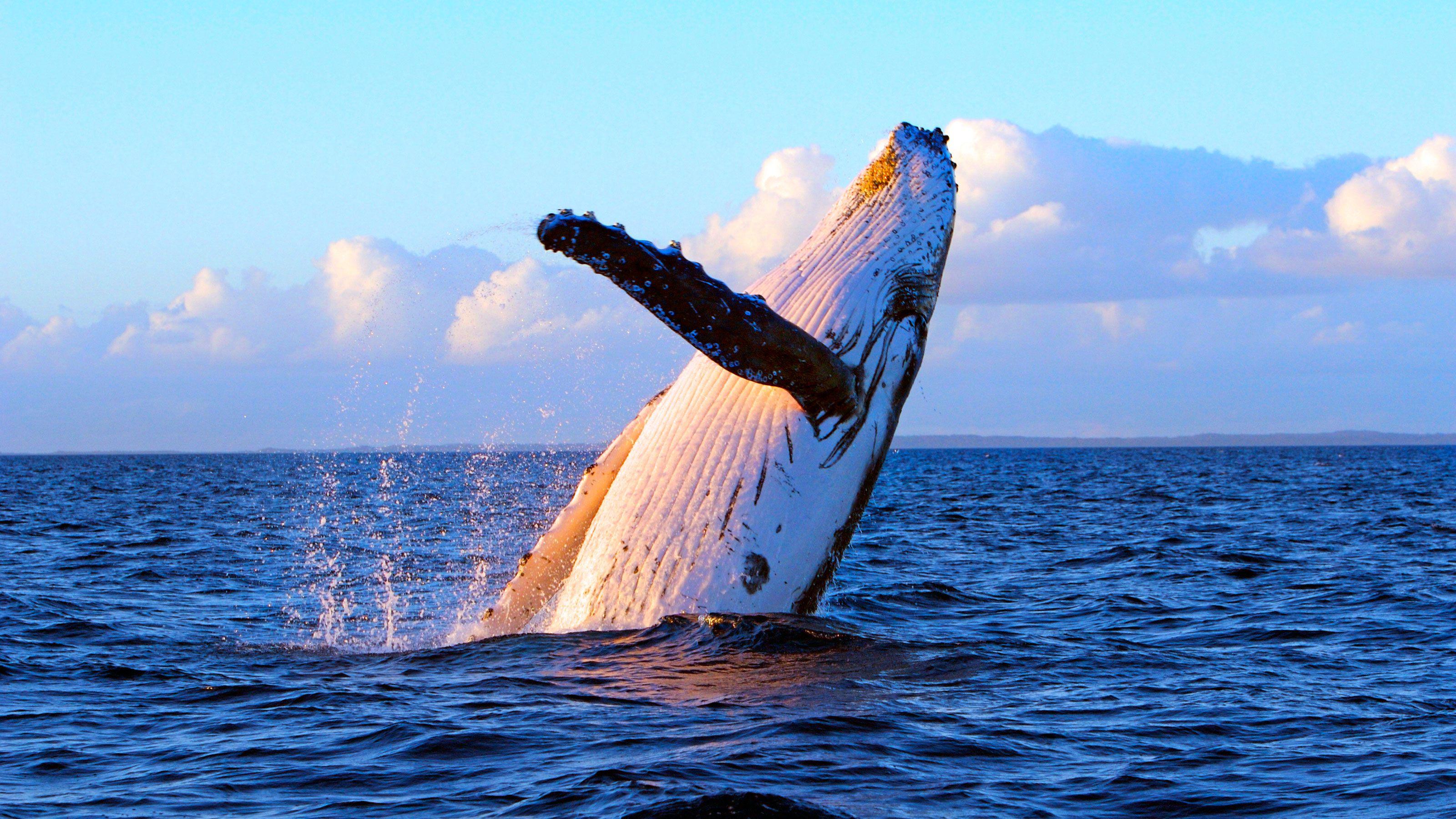 Фото китов на фоне кораблей собственные сбережения