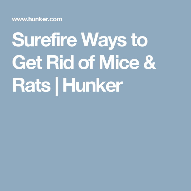 Surefire Ways to Get Rid of Mice & Rats | Hunker