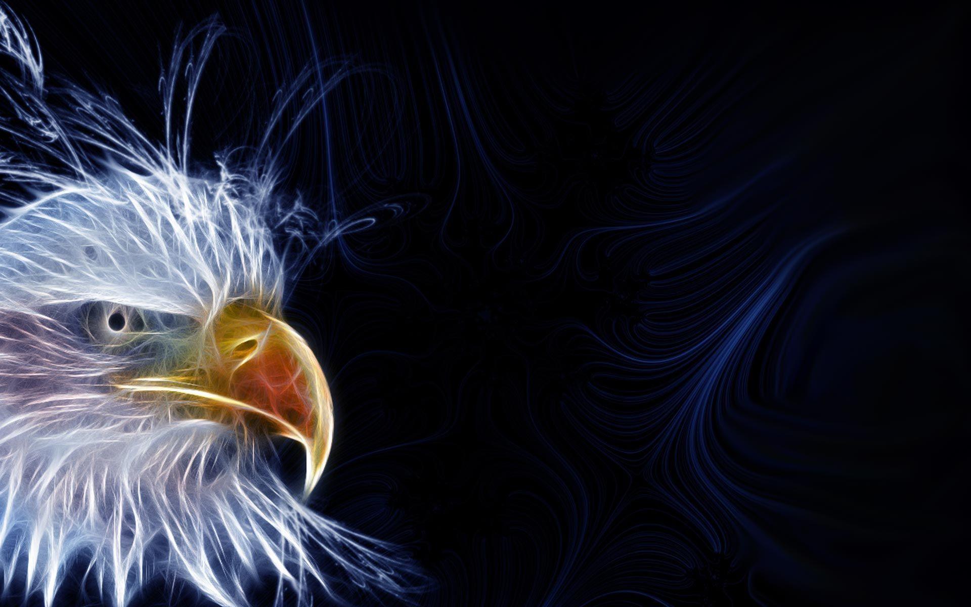 Hd wallpaper eagle - Bald Eagle Hd Wallpapers This Wallpaper