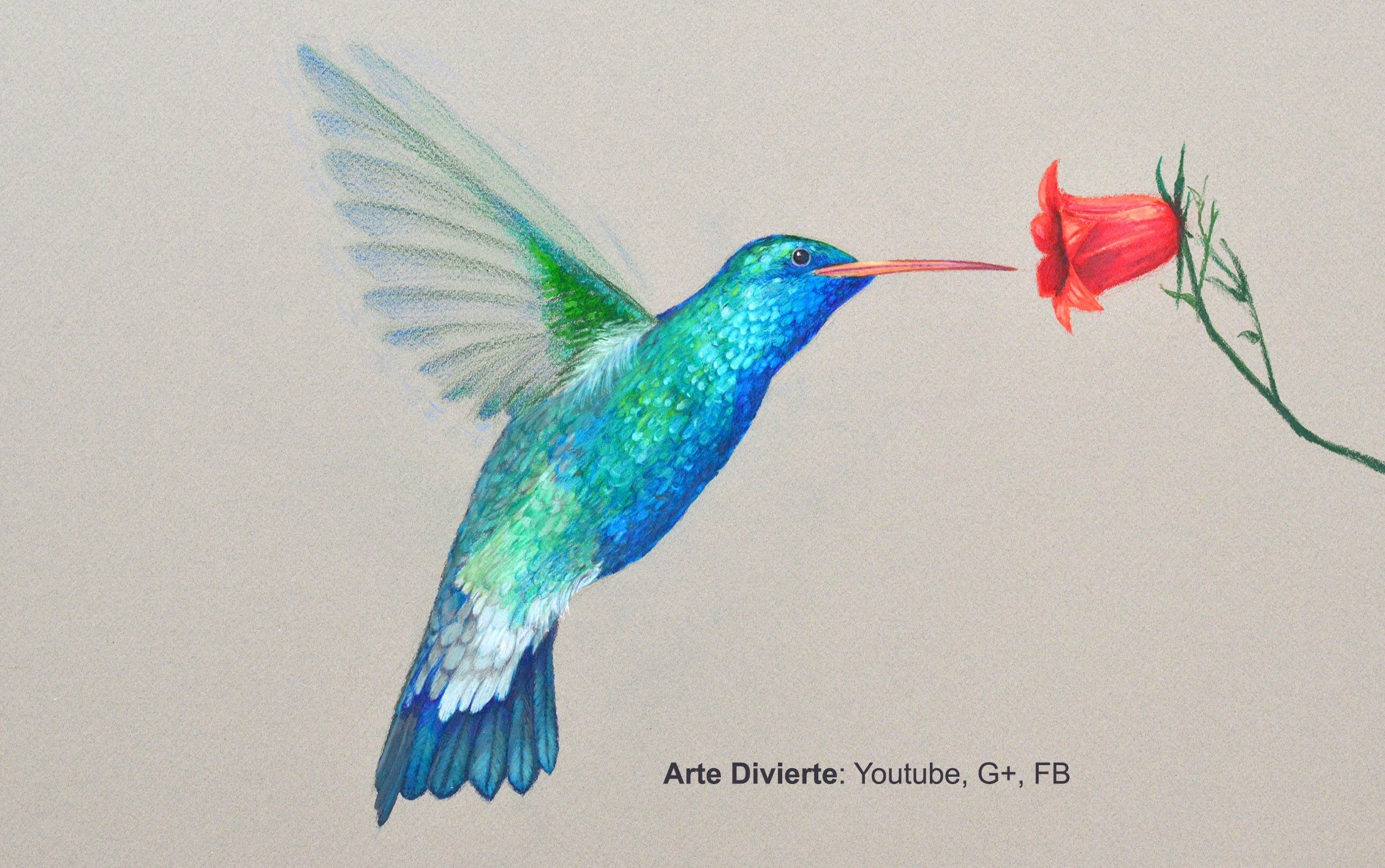 Cómo dibujar un colibrí con lápices de colores - Arte Divierte ...