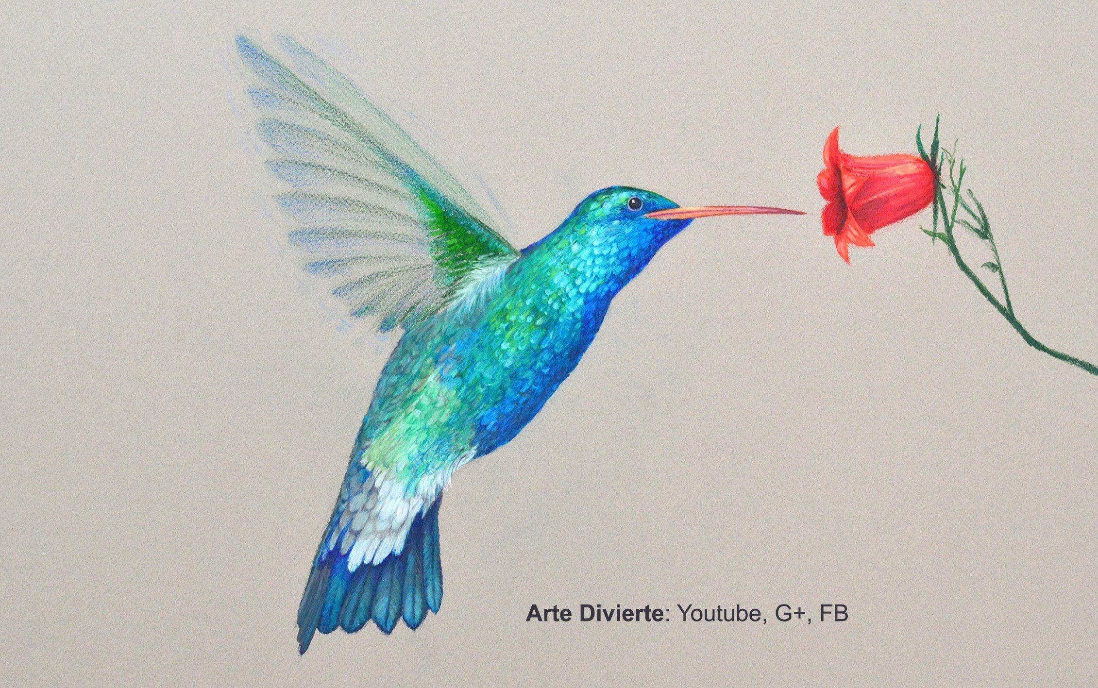 Como Dibujar Un Colibri Con Lapices De Colores Arte Divierte
