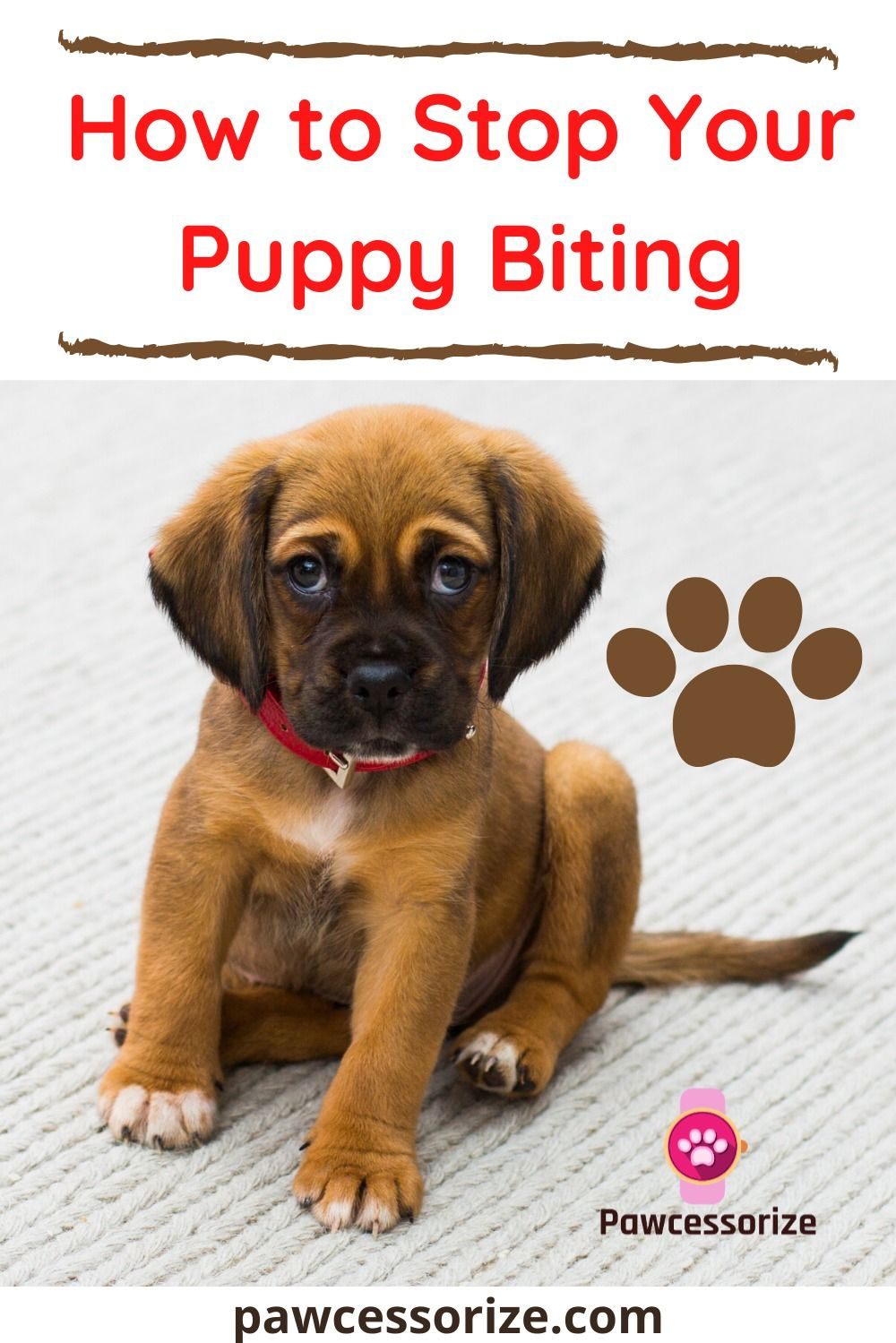HOW TO GET A PUPPY TO STOP BITING THE STEP BY STEP GUIDE