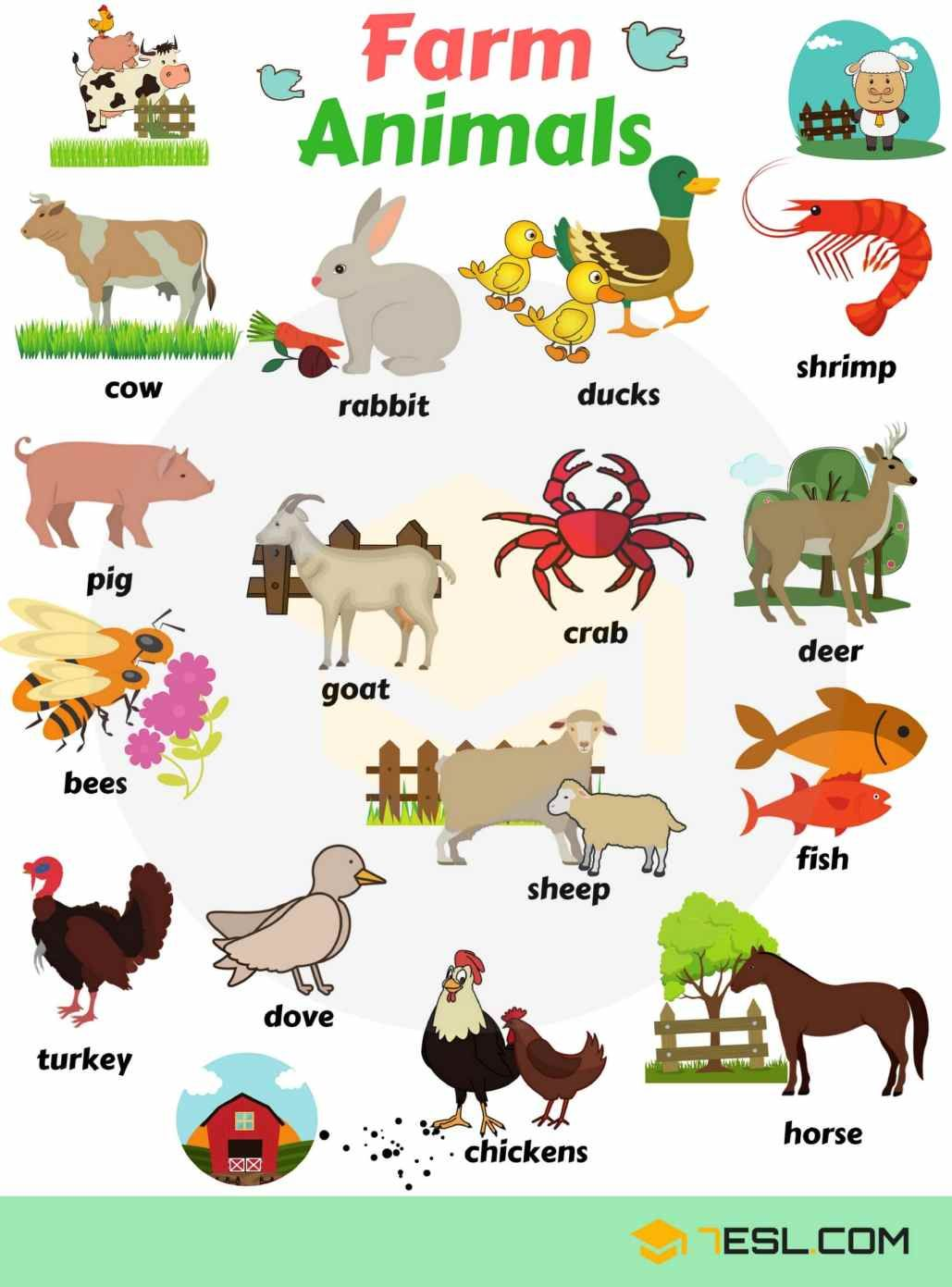 Learn Animal Names in English English vocabulary