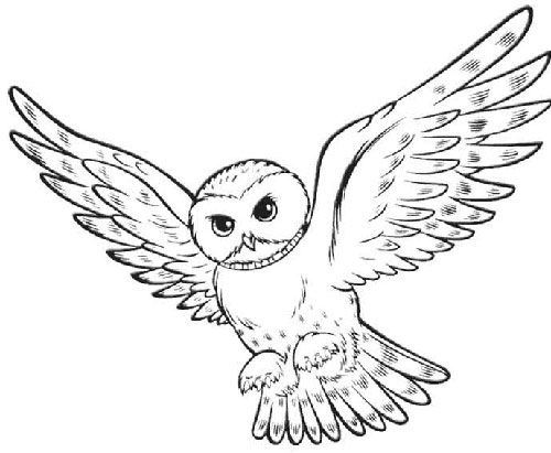 Flying Owl Line Drawing