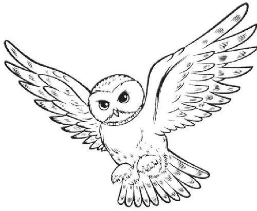 Oil Pastel Owl Art Lesson   Mottoparty, Harry potter und Eule