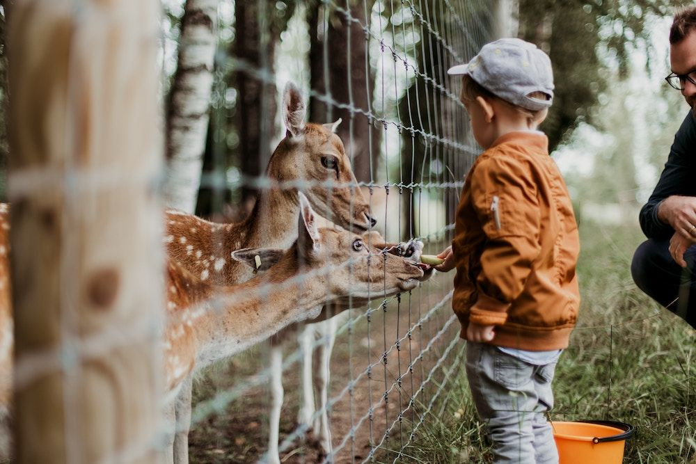London's Best Farms And Zoos For Children Zoo pictures