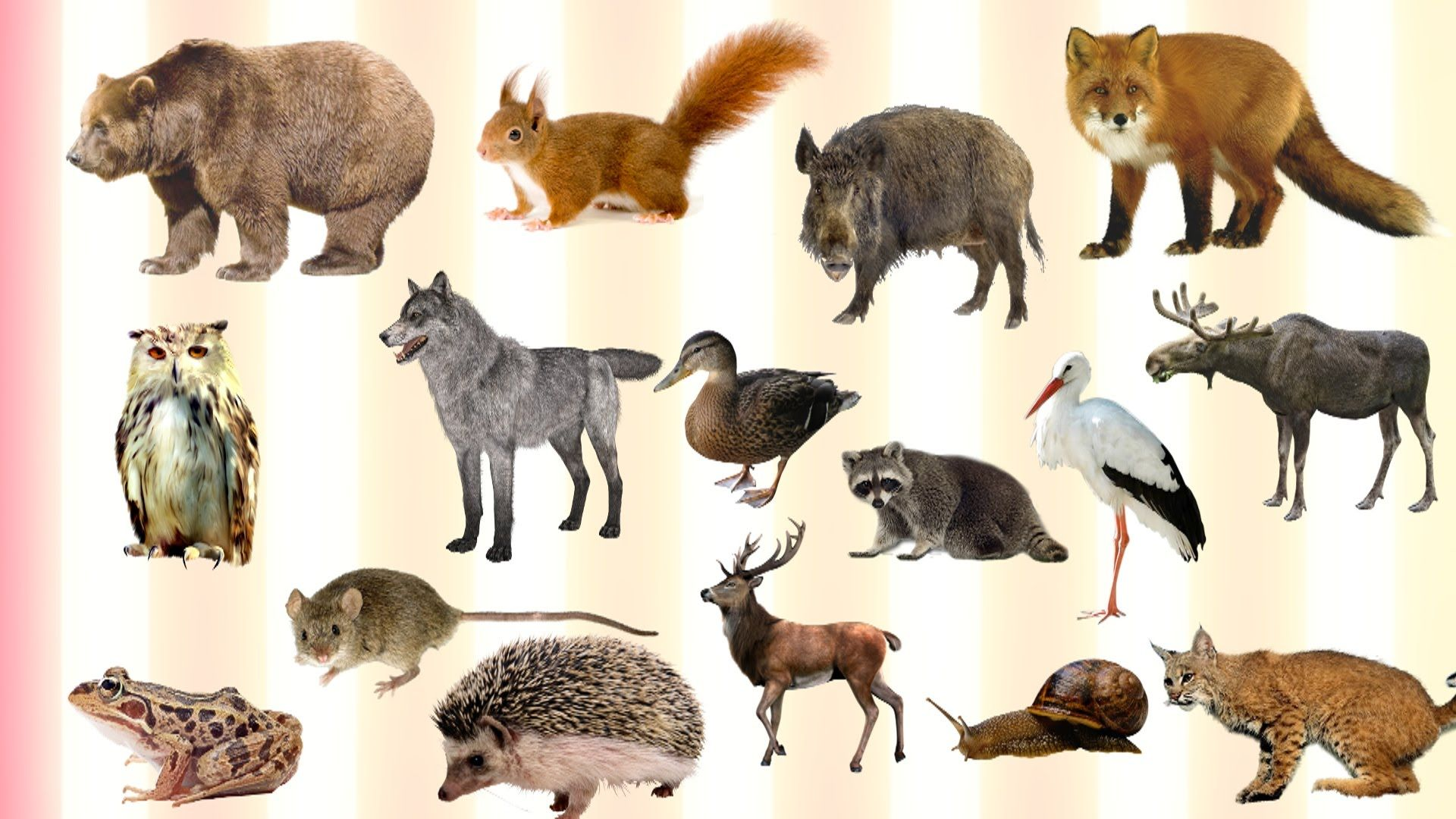 Learning Forest Animals Names and Sounds for Kids | Forest animals ...