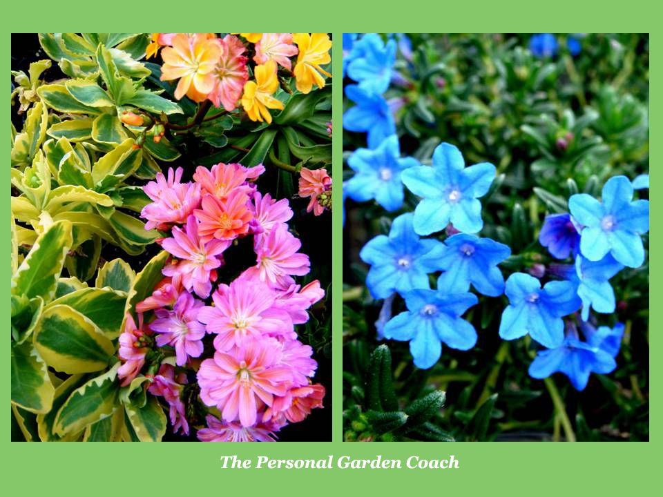 Early flowering perennial performers for impact perennials early flowering perennial performers for impact mightylinksfo Choice Image