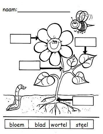 Onderdelen van een bloem benoemen. Kan ook way gedetailleerder voor ...