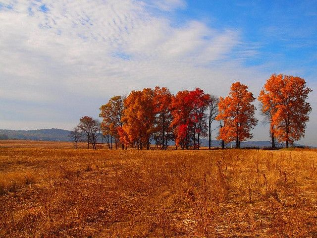 Trees on the road to Alburtis, PA by Don Campolongo, via Flickr