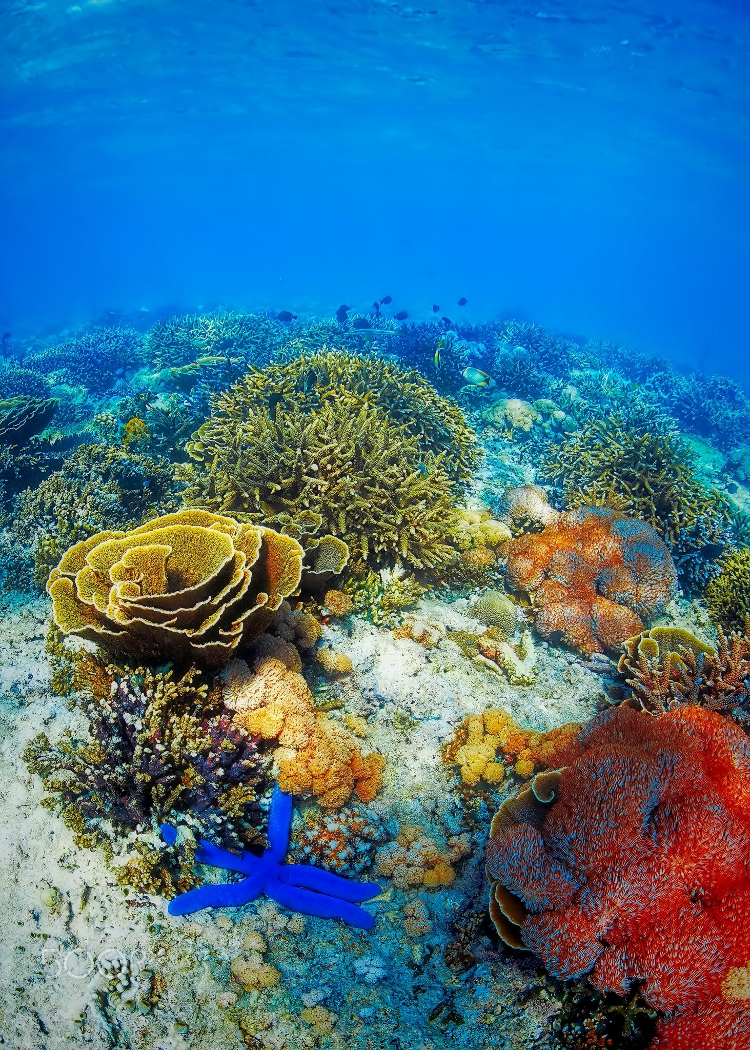 Underwater Landscape Coral Reef Photography Sea And Ocean Beautiful Sea Creatures