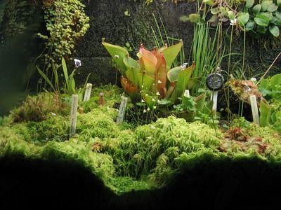 carnivorous peat garden
