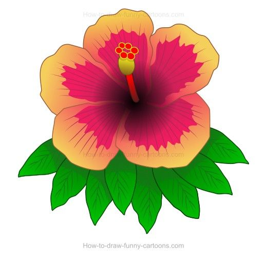 How To Create A Hibiscus Drawing Hibiscus Drawing Super Coloring Pages Drawings