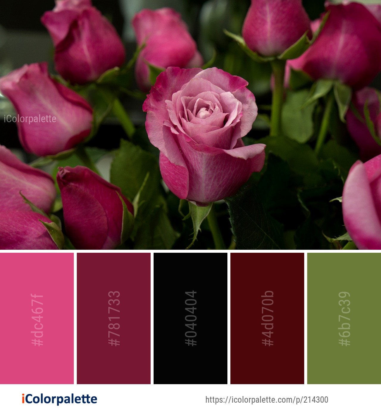 Color Palette Ideas From Flower Rose Family Image Icolorpalette Colors Inspiration Graphics Design Inspira Paint Color Combos Color Palette Rose Family