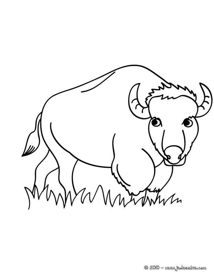 coloriage d 39 un animal sauvage le bison un coloriage original et un moyen ludique de faire. Black Bedroom Furniture Sets. Home Design Ideas