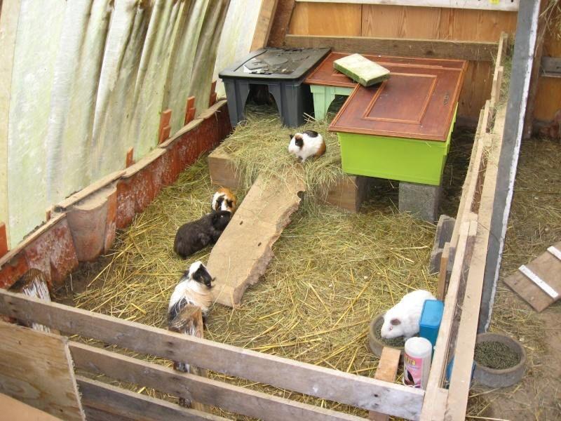 construction cabane cochon d 39 inde. Black Bedroom Furniture Sets. Home Design Ideas