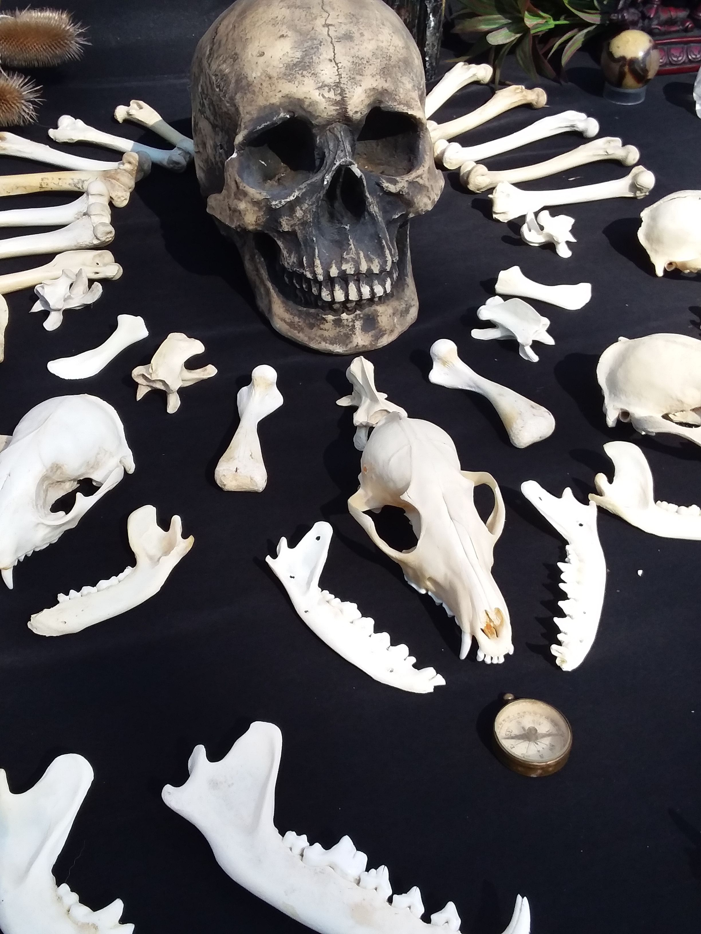 Pin By Alexa Fire Sage On Bone Altars Animal Bone Jewelry Bone Jewelry Real Bone Jewelry