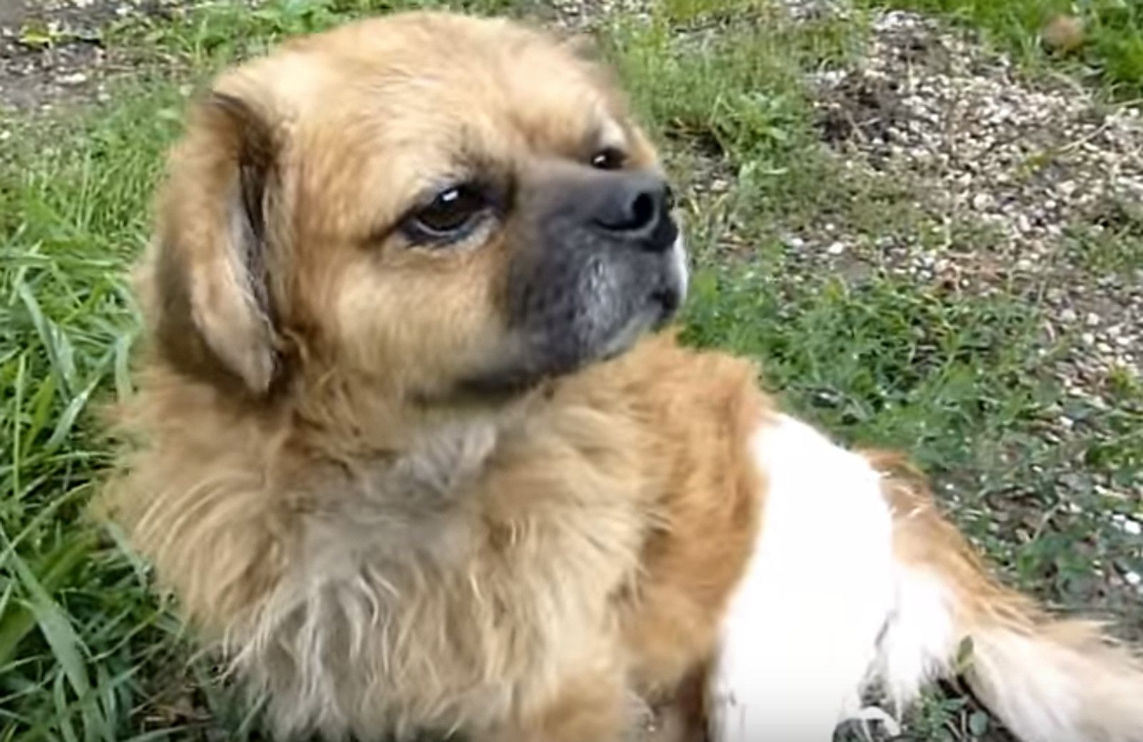 Homeless Dog With Broken Leg Gets Second Chance at Life