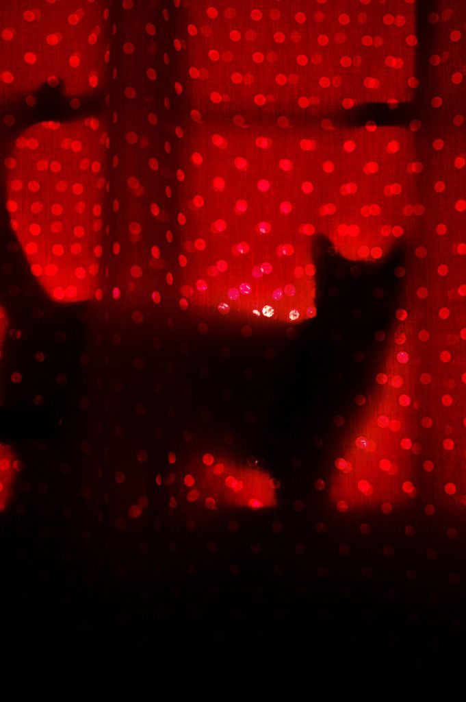 cat in window | Shades of red, Red aesthetic, Black and red