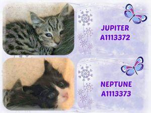 Jupiter A1113372 And Neptune A1113373 Neptune Jupiter Animal Help